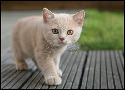 Crouchpaw
