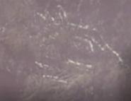 Super Zaurus Petroglyph