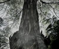 Niruwanie joins the tree