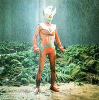TARO RAIN