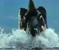 Dorigorus Adept Swimmer