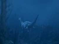Zaurs Swims Off