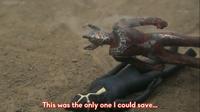Taro burned