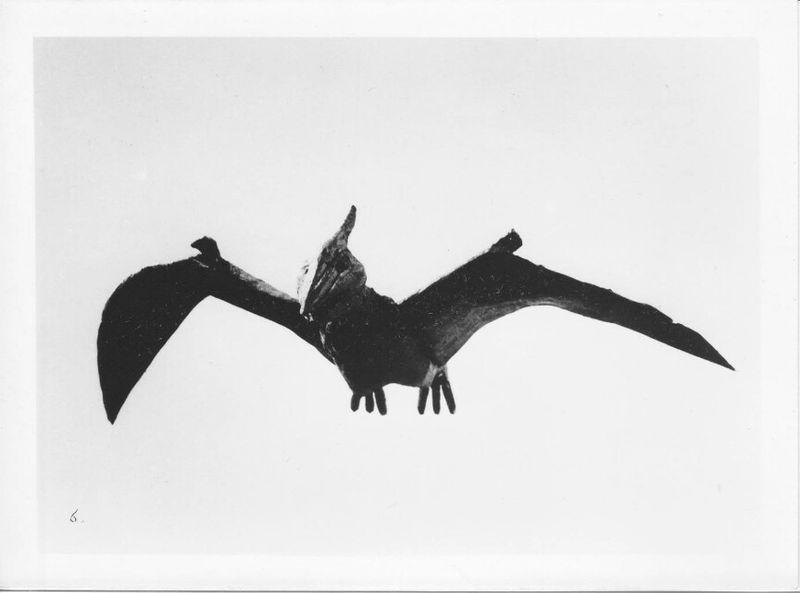 Giant Pteranodon