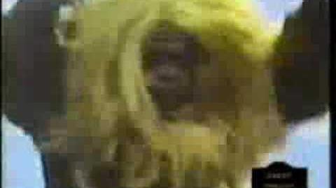 Ultra 7 Monkey Business