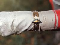 Ultra Bracelet I