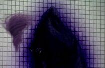 Dark Wizard.jpg