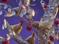 27 - Chicken on Apple Planet