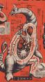 Goldon Anatomy