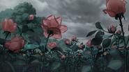 Rose 1e