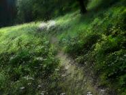 Umiog forest p2a