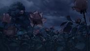 Rose 1en
