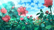 Rose 1ef