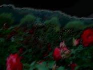 Umiog rose 2cn