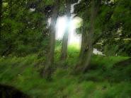 Umiog forest p2b