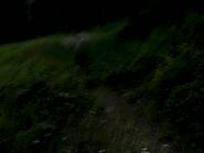 Umiog forest p2an