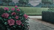 Rose 1c
