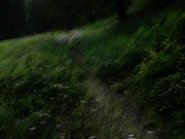 Umiog forest p2ar