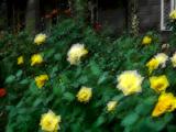 Golden Land/Backgrounds