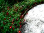 Umiog garden se3a