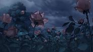 Rose 1er