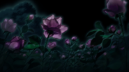 Rose 1en2