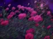Umiog rose 1cp