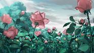 Rose 1ec