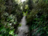 Umiog forest p3a