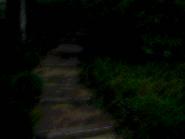 Umiog forest p1an