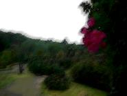 Umiog rose 2b