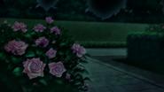 Rose 1cn