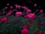 Umiog rose 1cn