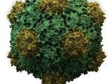 Kiattin-Virus