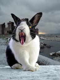 Cuddles the Bunny