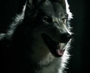 WerewolfMason