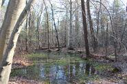 00hockamock swamp