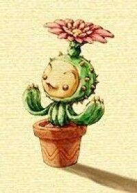 Lil Cactus.jpg