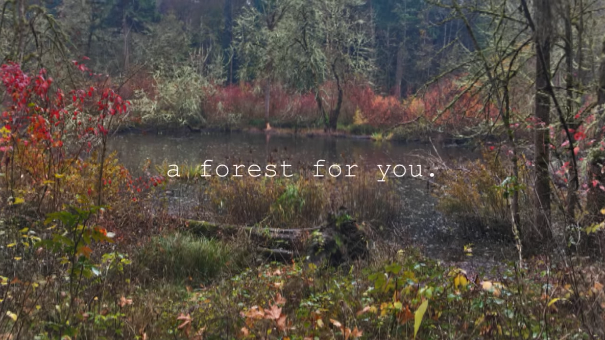 A forest for you.