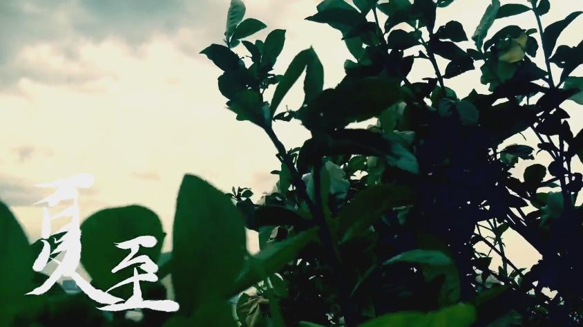 夏至 (Xiàzhì)
