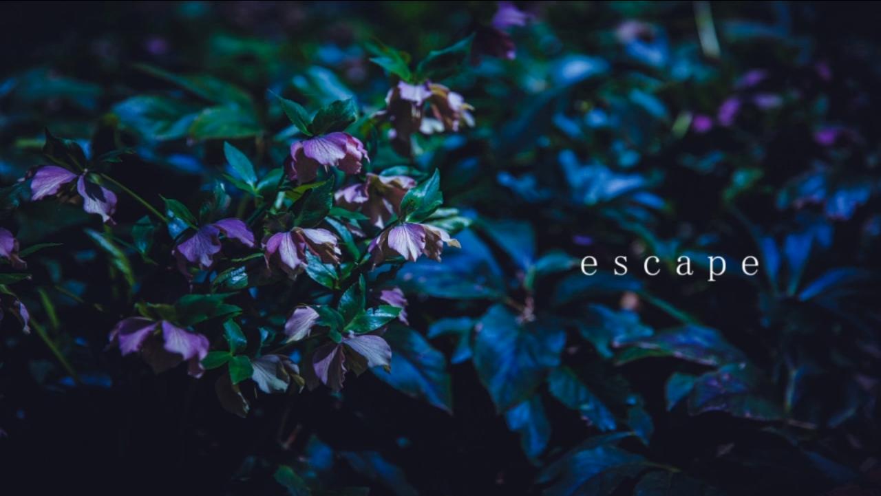 Escape/gogotea