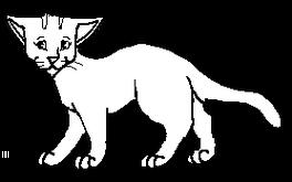 Samotář.kočkaK