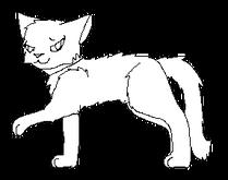 Tulák.kočka Krátké
