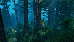 Černý les.jpg