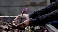 Garden Herb2