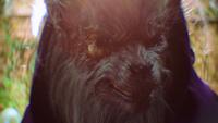 LGC216-034-Big Bad Wolf