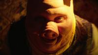 LGC216-078-Pig