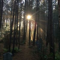 Mystic Falls Cemetery 2014-10-20 Ian Somerhalder Instagram
