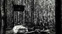 2017-03-12 Woods-Pierre OHalloran-Instagram