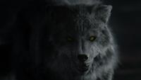 LGC101-106-Wolf-Hope
